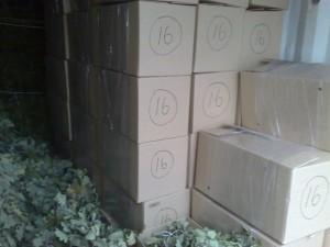 коробки с вениками