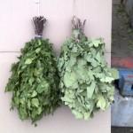 березовые и дубовые веники