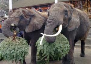 слоны за обедом